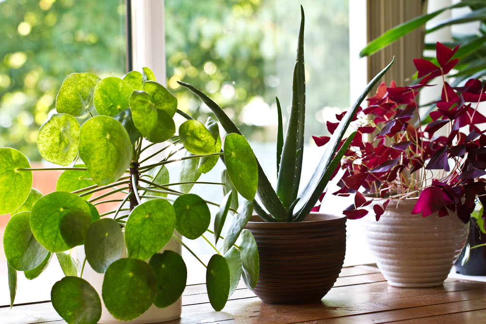 The Many Benefits of Keeping Indoor Plants